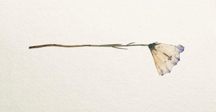 pressed-flower